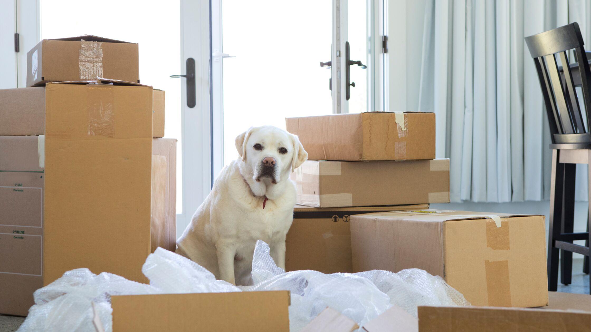 Umzug mit Haustieren: Tipps & Checkliste