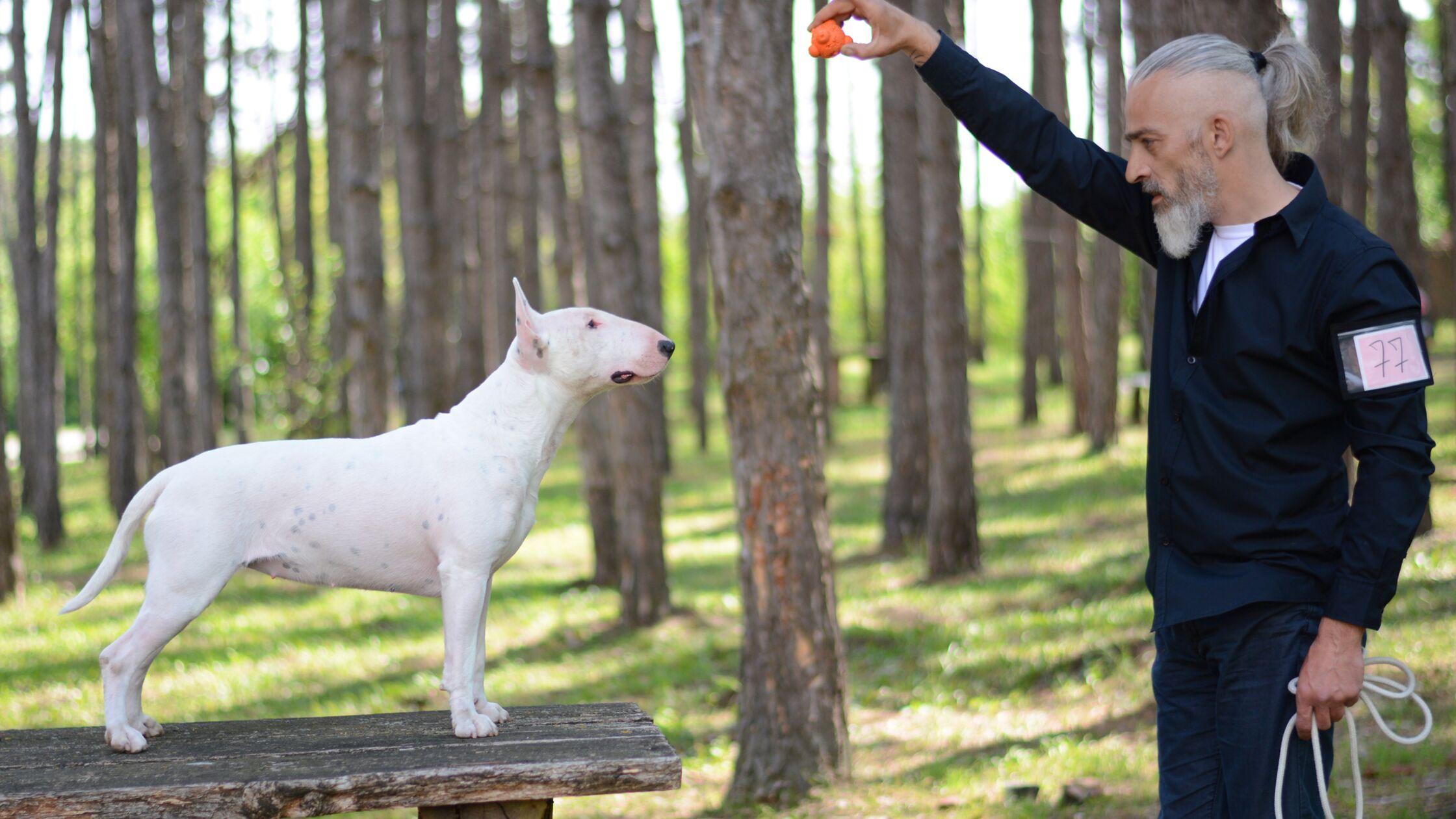 Training Sachkundenachweis für gefährliche Hunde