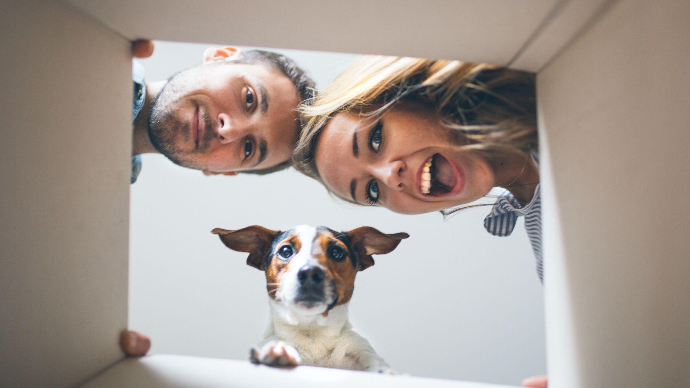 Pärchen und Hund schauen gemeinsam von oben in einen Umzugskarton hinein
