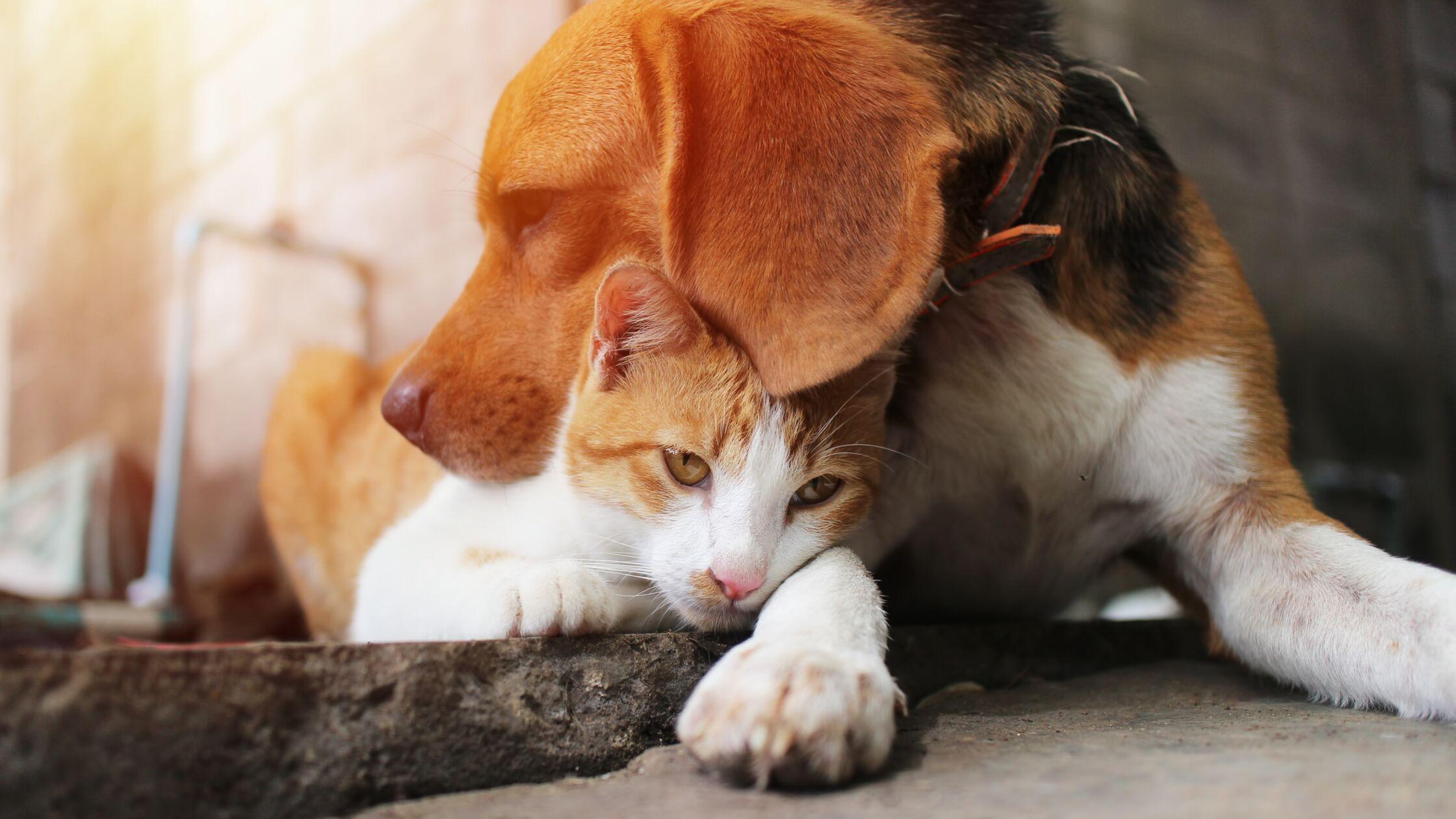 Hund und Katze kuscheln draußen.