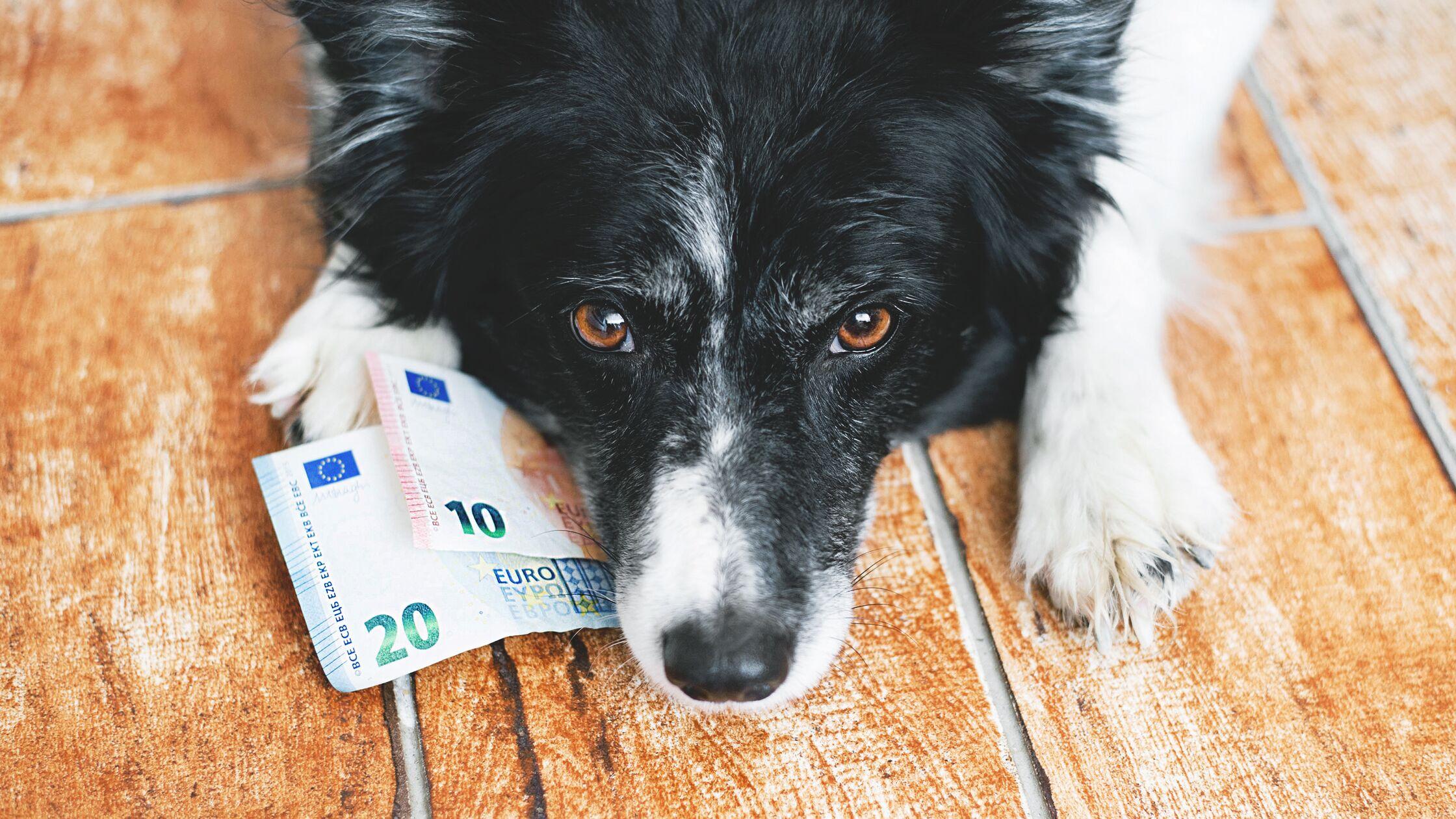 Hund hat Geldscheine in der Schnauze