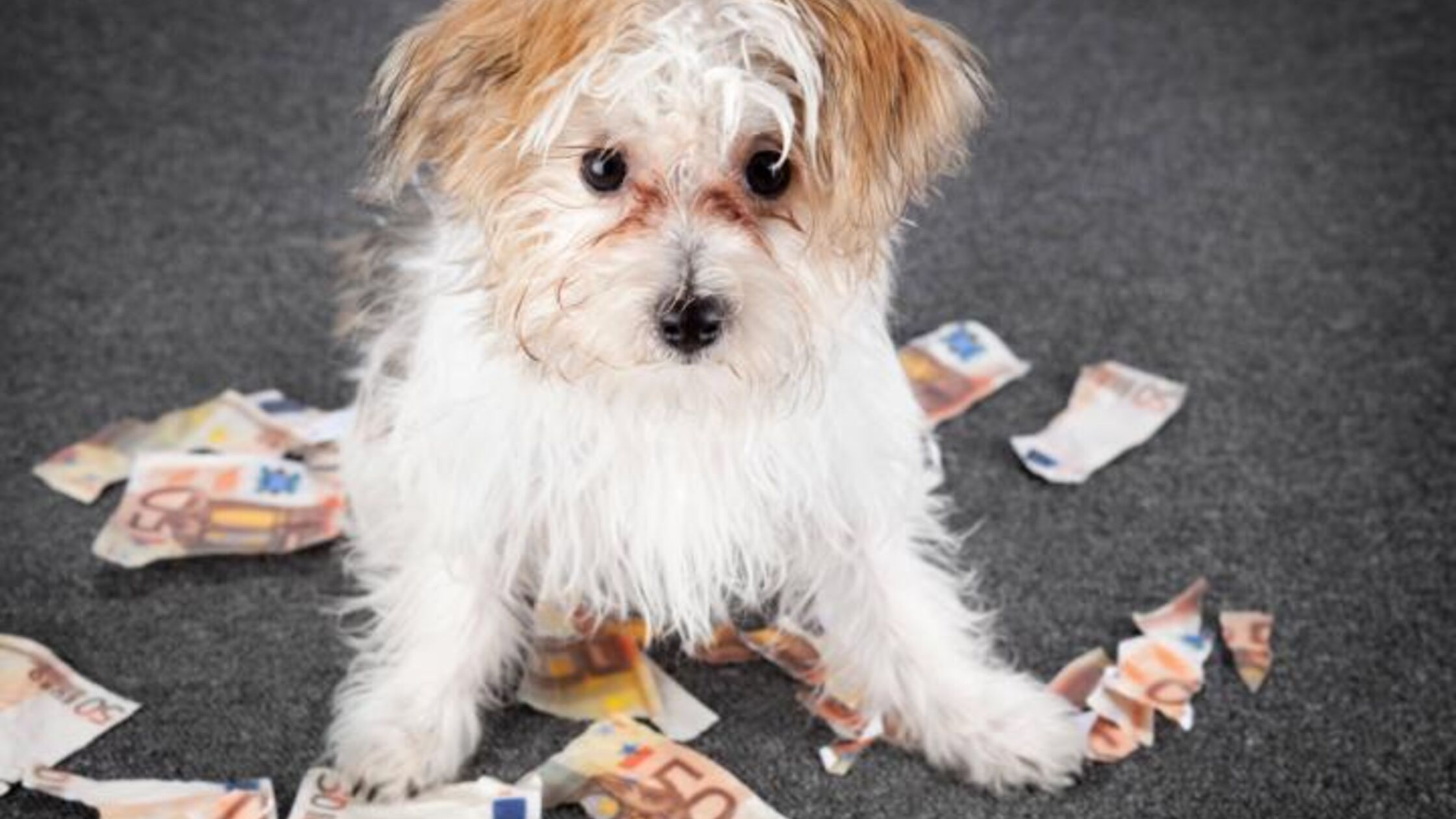 Hundewelpe sitzt zwischen zerknüllten und zerrissenen Euroscheinen