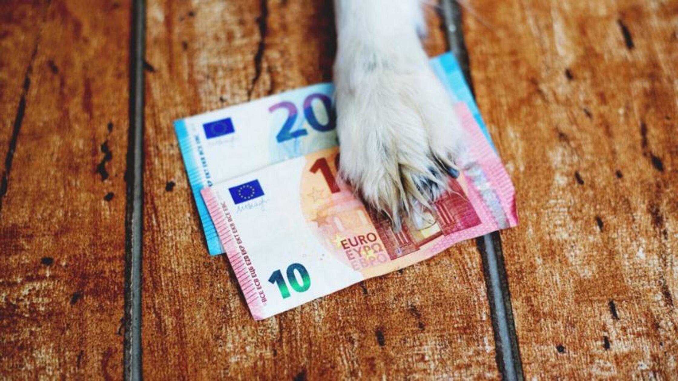 Hundepfote hält die ermäßigte Hundesteuer fest