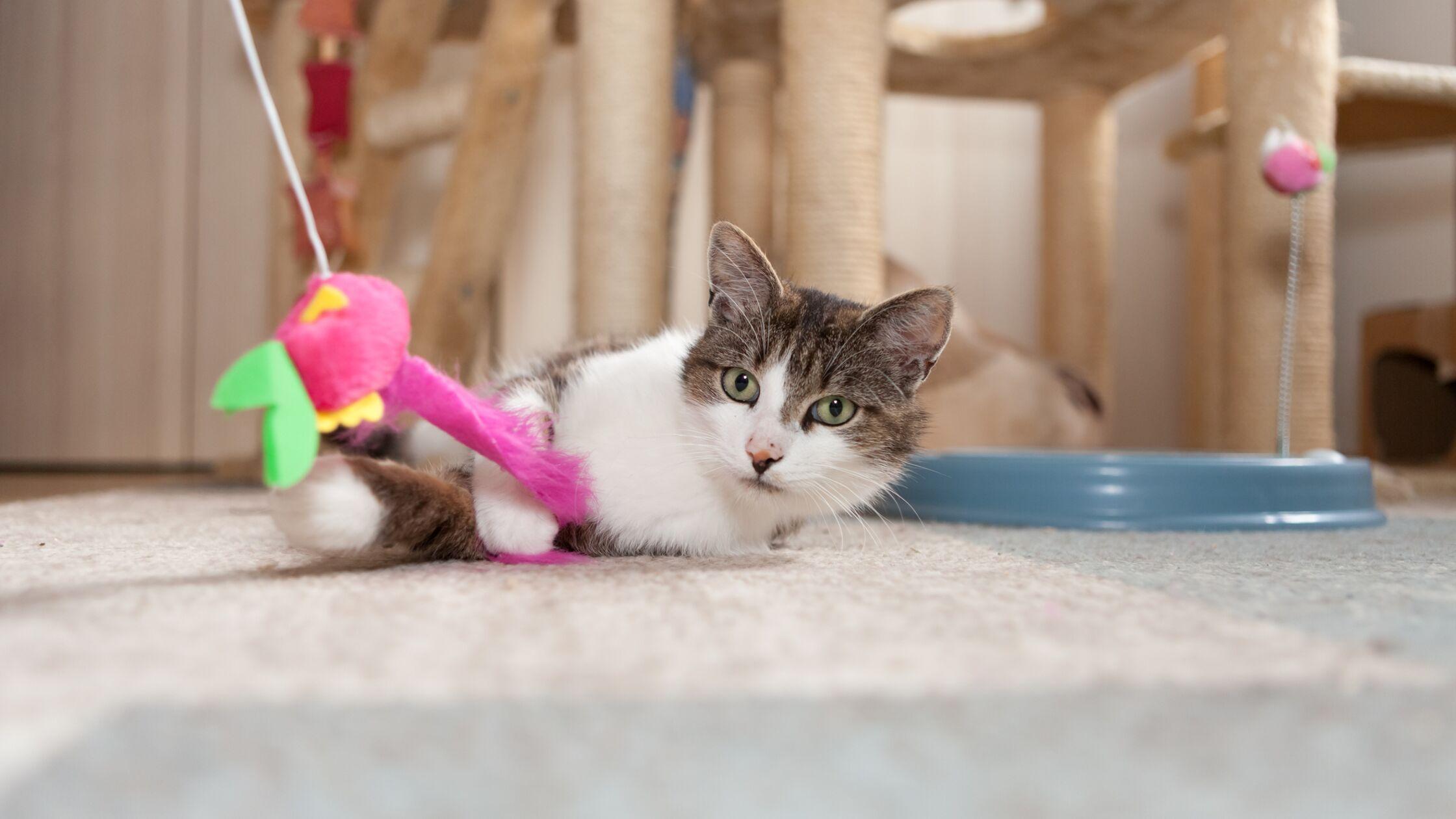 Katze liegt vor einem Kletterturm und spielt.
