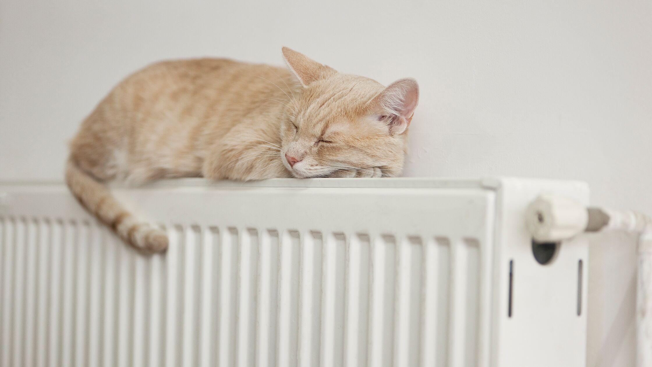 Kuschelig warm soll es in der neuen Wohnung sein. Damit das ohne Ärger klappt, ist es gut, wenn Sie schon vorher wissen, welchen Heizungstyp Sie haben.