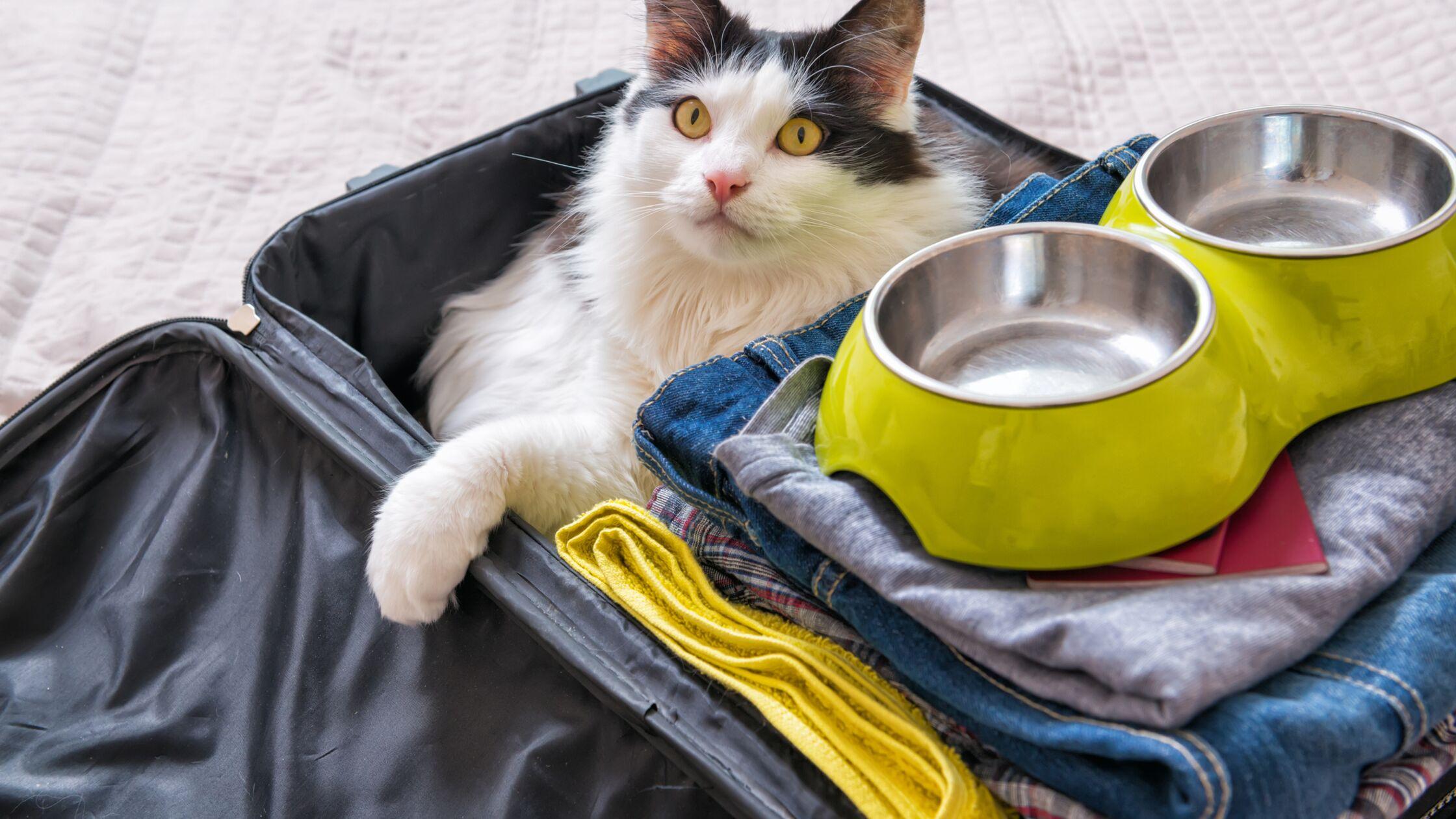 Katze im gepackten Koffer