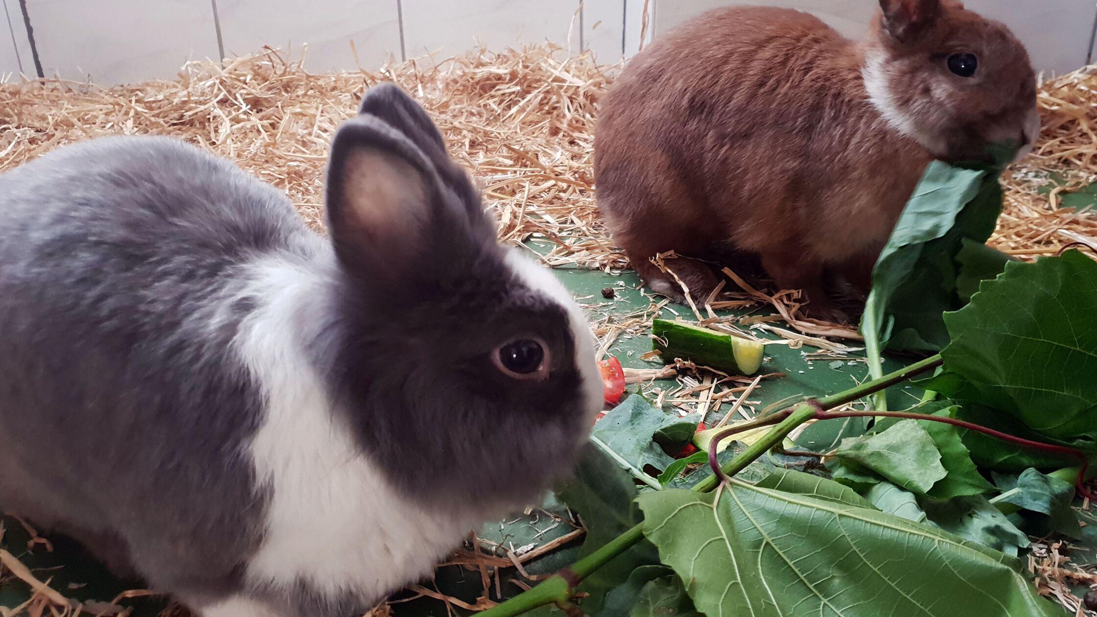 Wohnungskaninchen fressen frisches Grünzeug