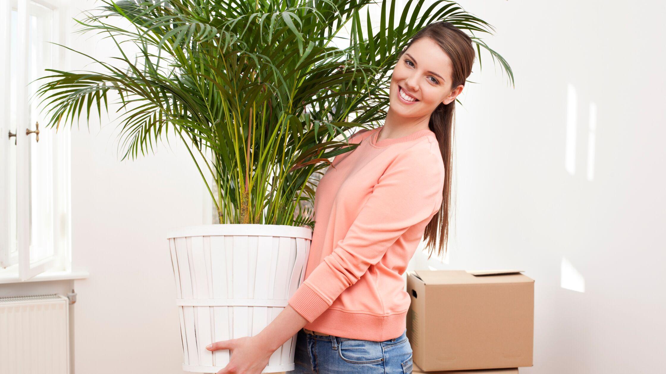 Frau transportiert große Kübelpflanze