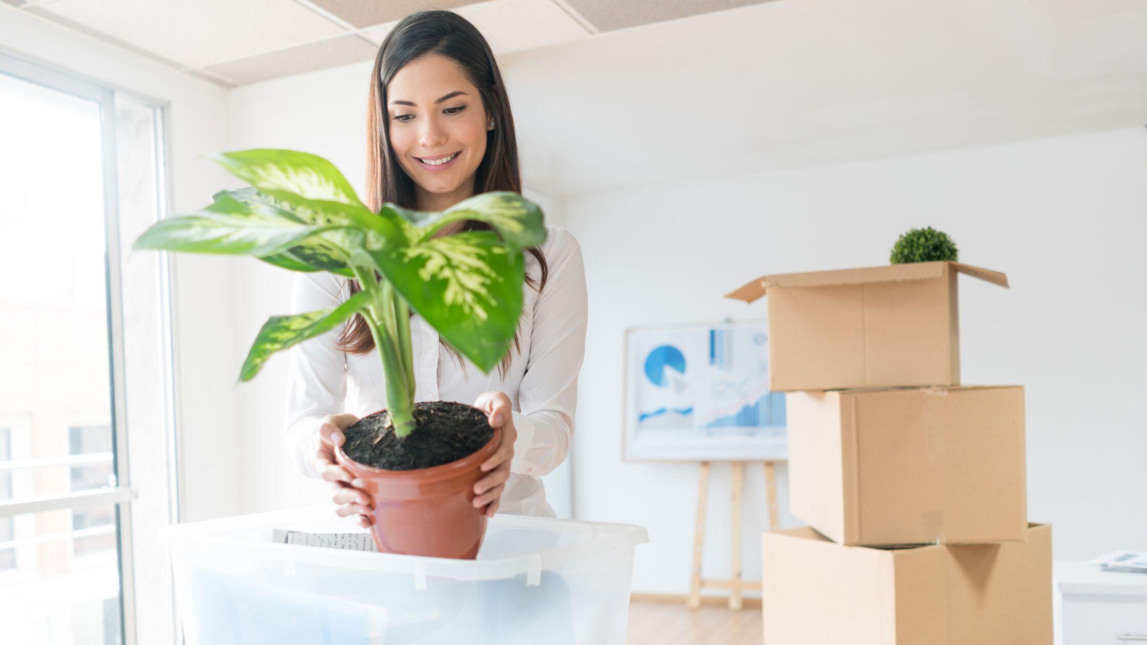 Frau sucht nach dem Transport Standort für ihre Pflanze