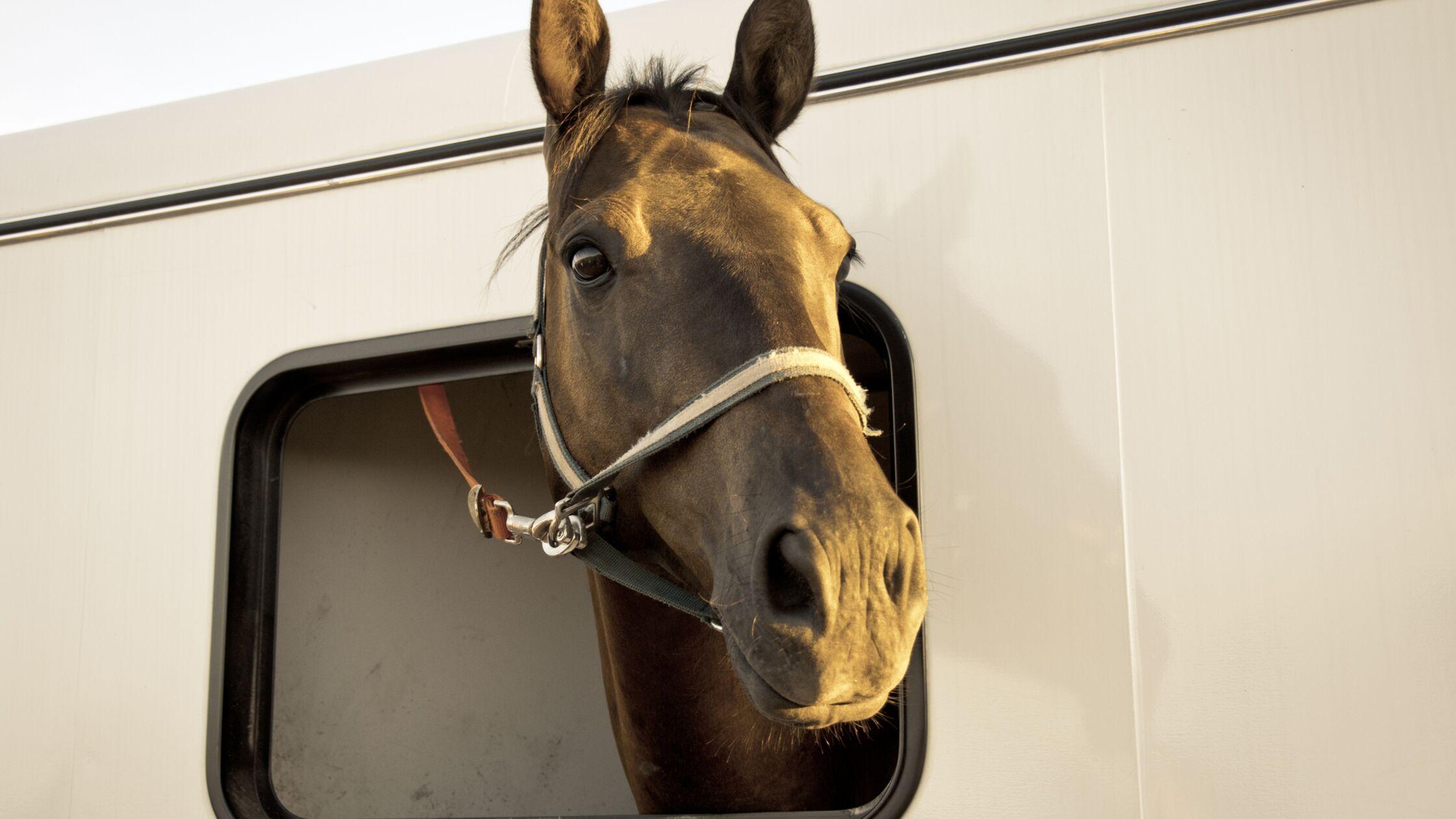 Pferd transportieren