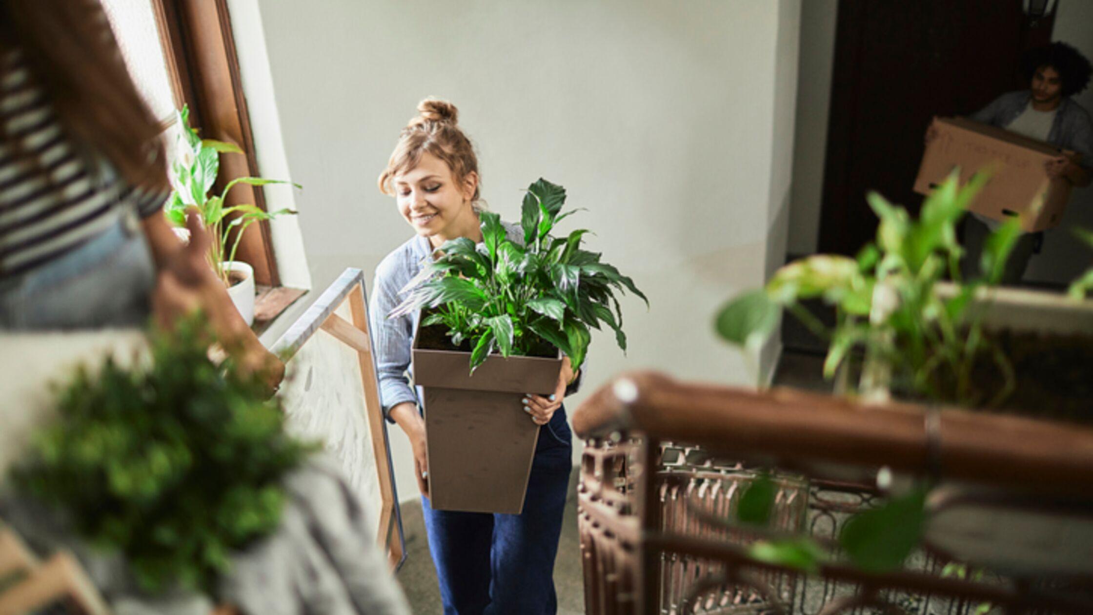 Umweltfreundlich umziehen: Nachhaltig ins neue Zuhause