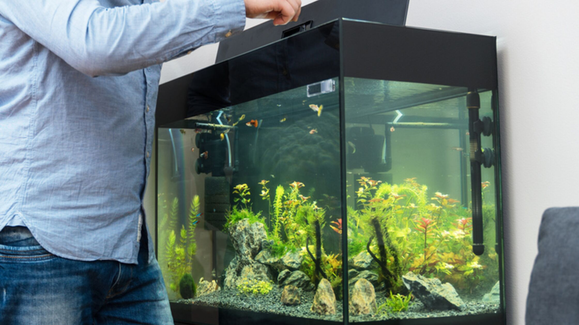 Mann füttert Fische im Aquarium