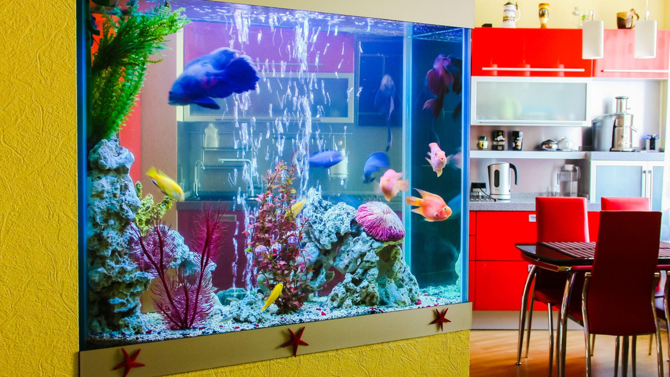 Transport des Aquariums: Fische sicher umziehen