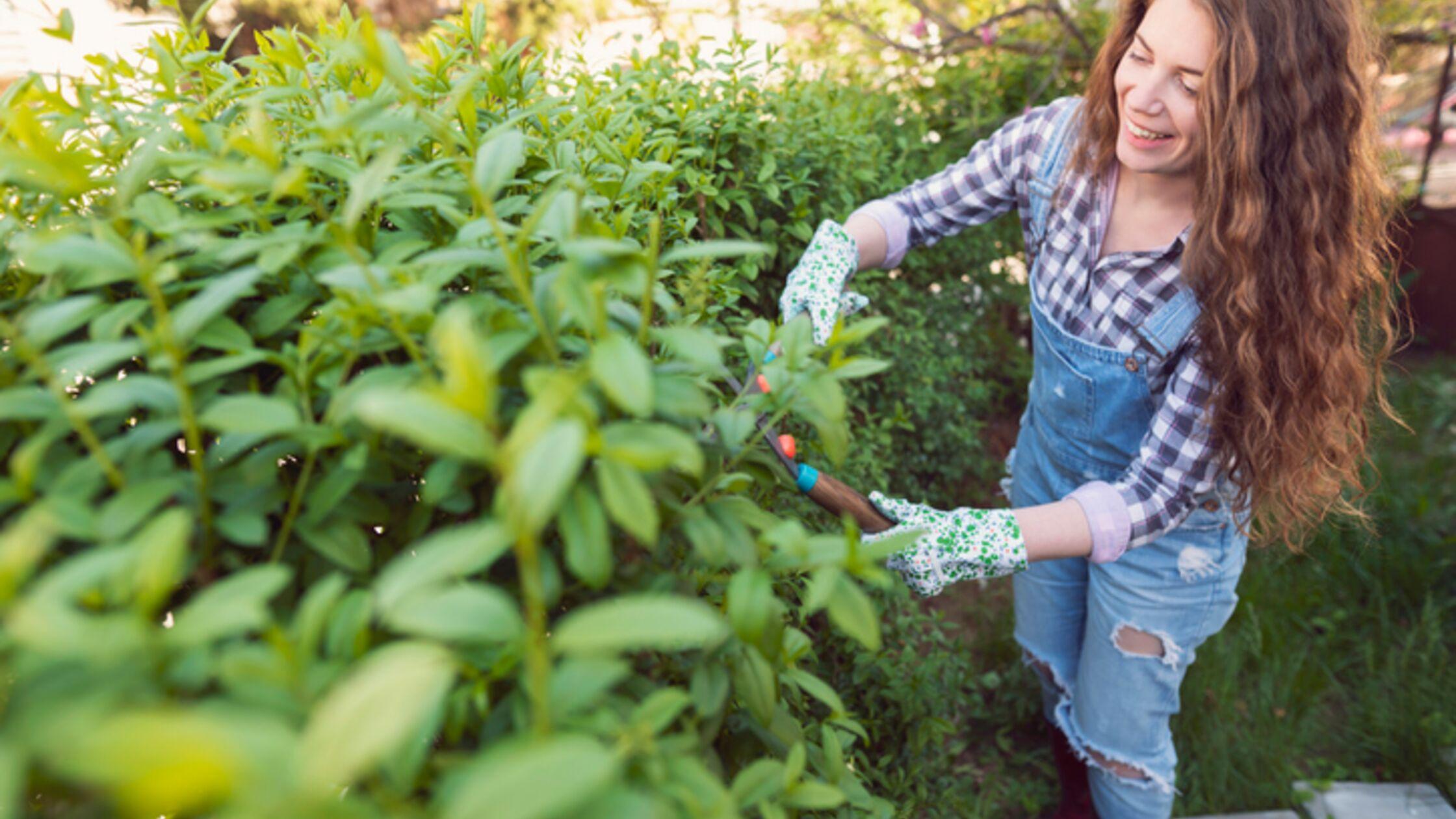 Ungestört im Garten: Schöne Ideen für mehr Sichtschutz
