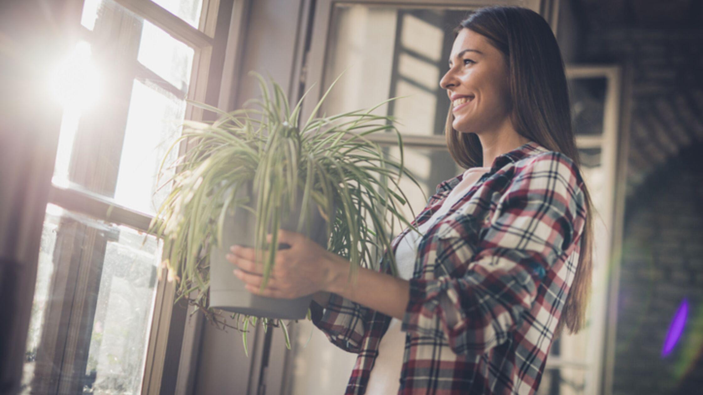 Frau mit pflegeleichter Zimmerpflanze