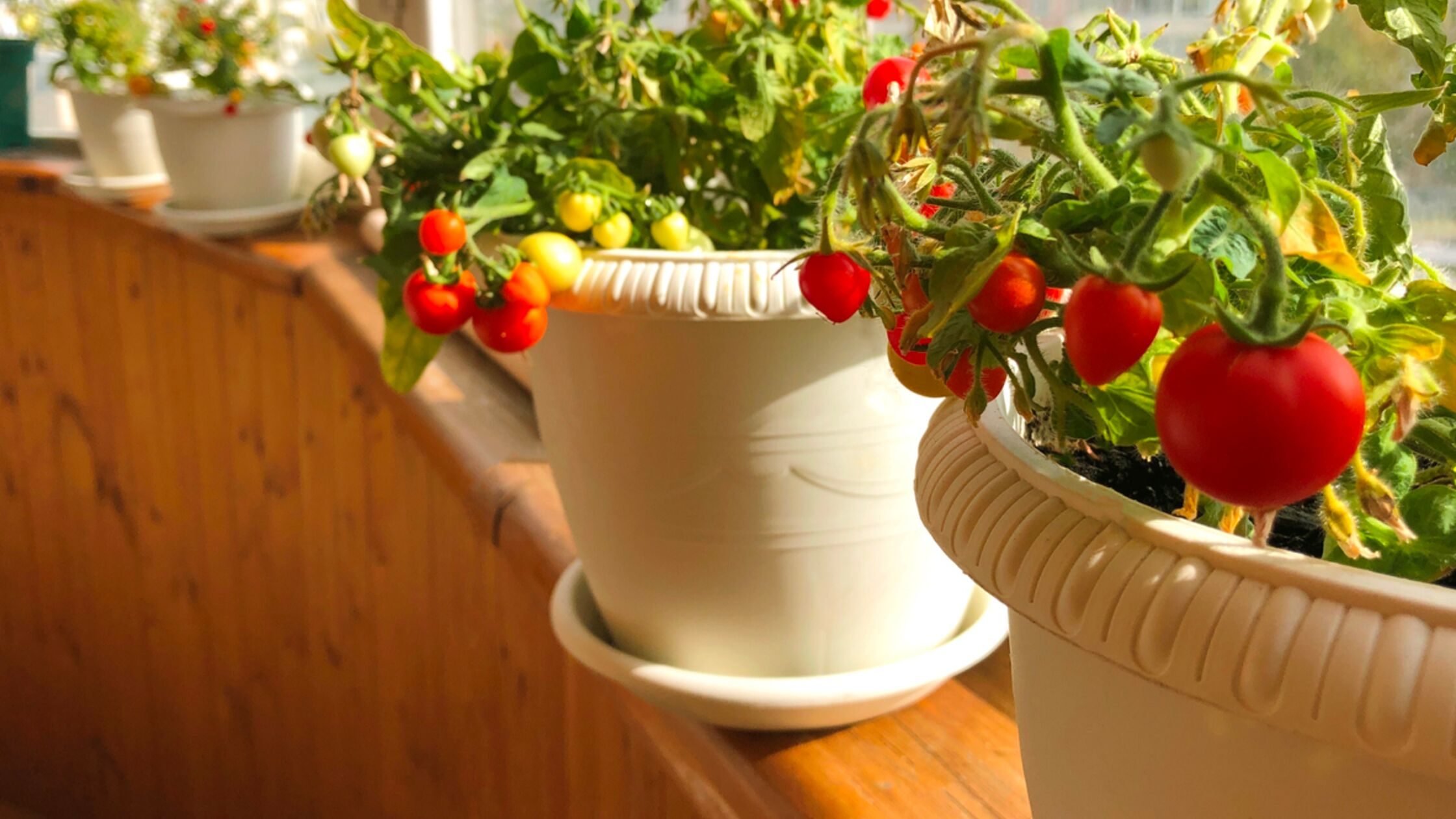 Gemüse in der Wohnung anbauen: So geht es ohne Balkon