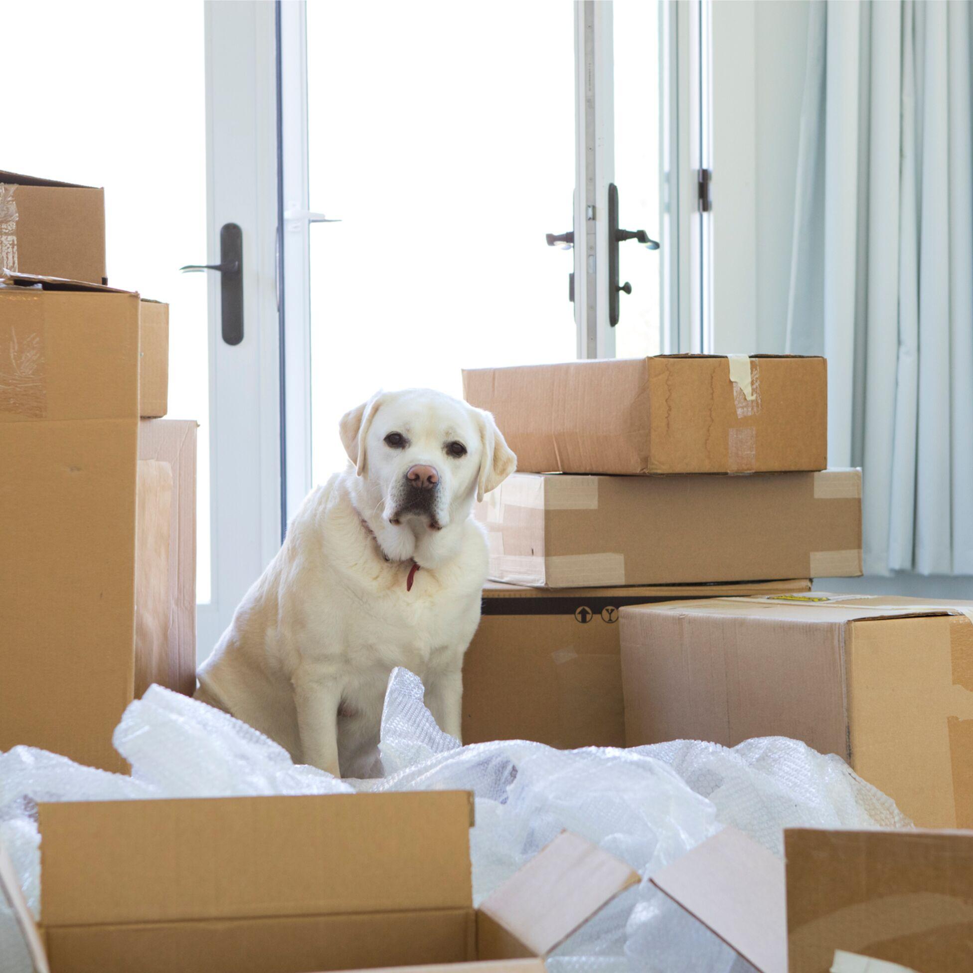Haustiere In Mietwohnungen Was Ist Erlaubt