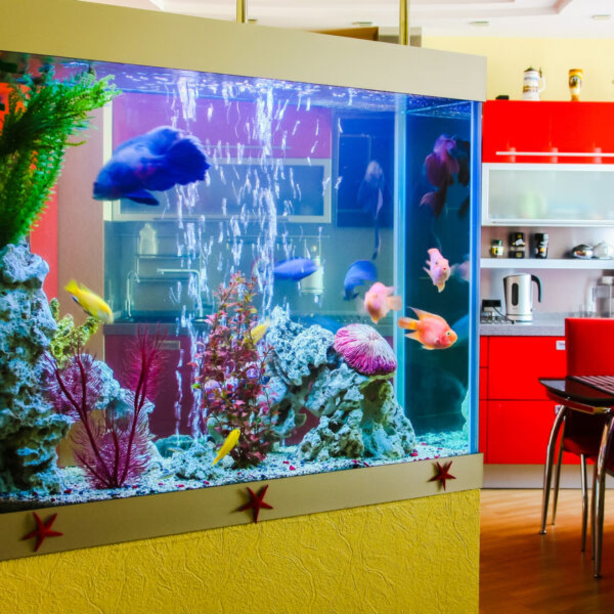 Aquarium im Wohnzimmer