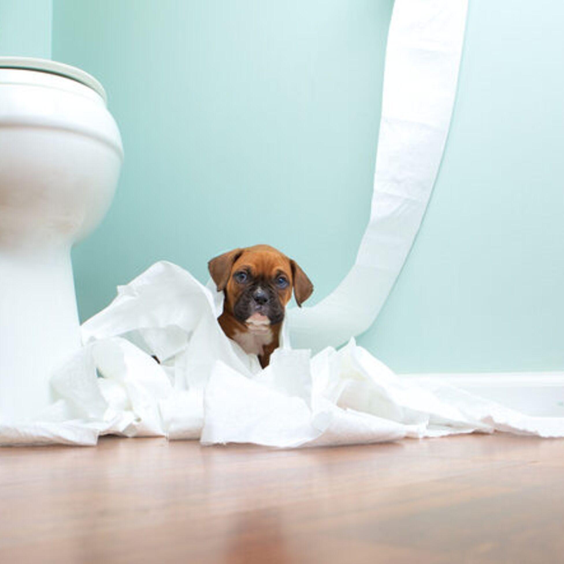Hund im Badezimmer