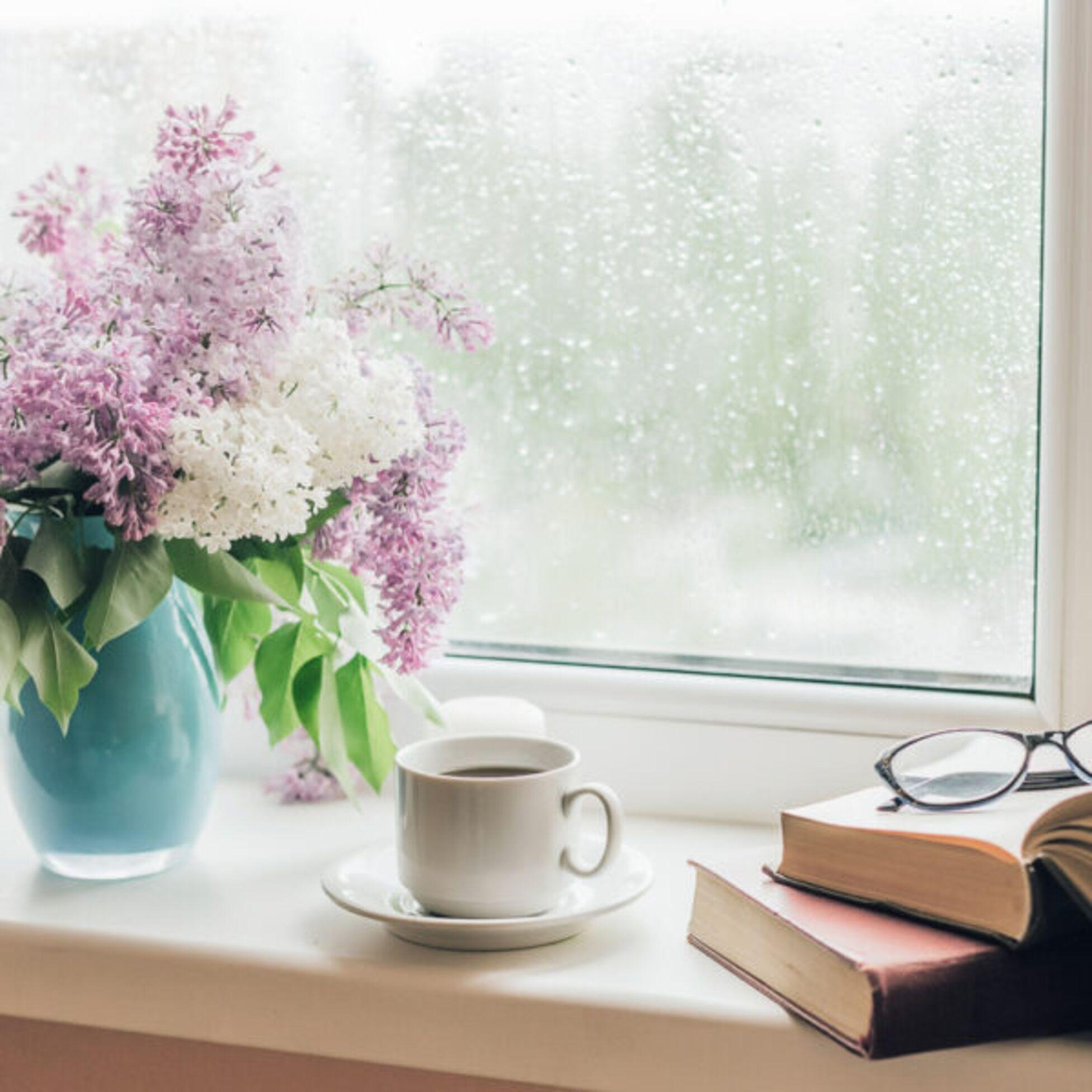Flieder und Bücher auf Fensterbank