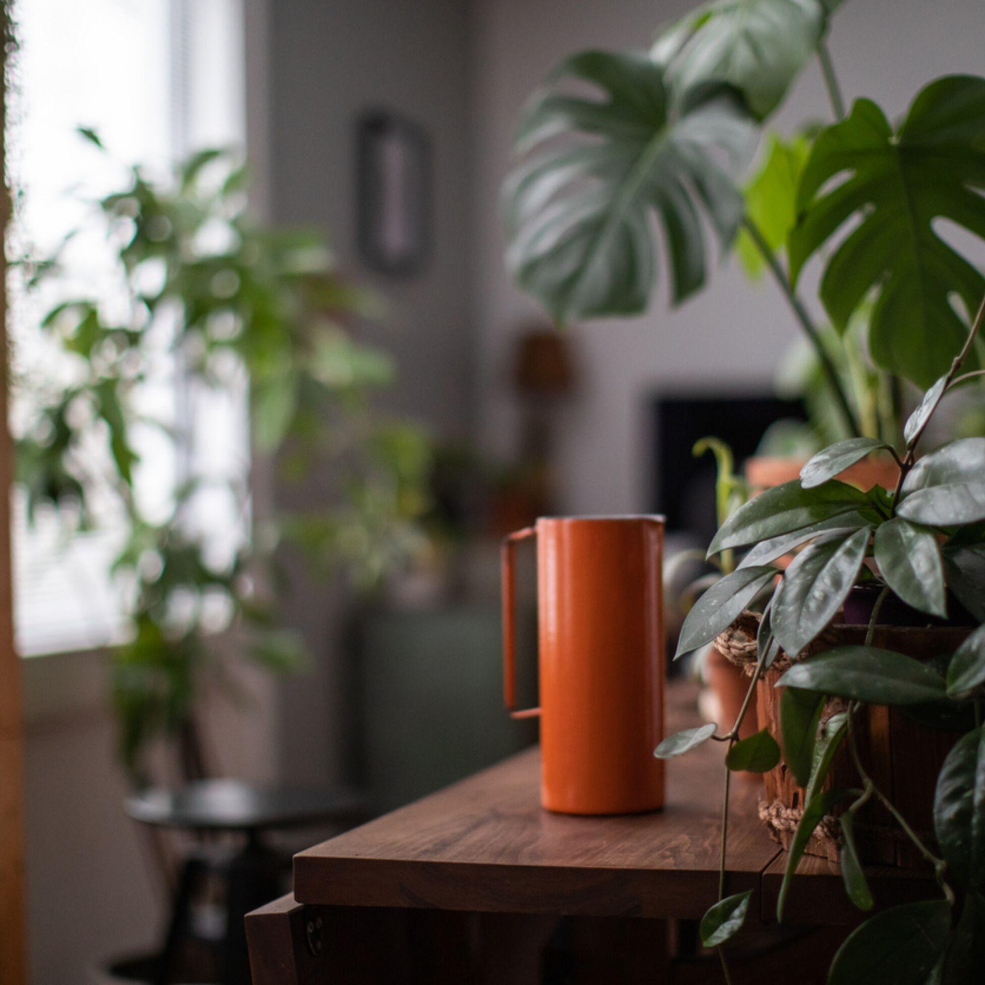 Raum mit Zimmerpflanzen, die wenig Licht brauchen
